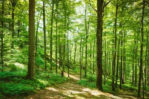 Bestattung Unvergessen Naturbestattung Baumbestattung