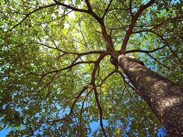 Bestattung Unvergessen Baumbestattung